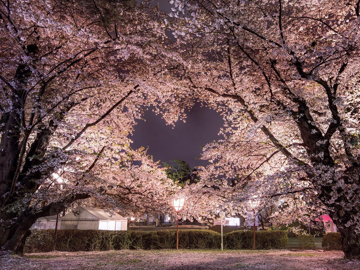 「よくね?」と話題を集めたハートの桜(写真提供:Laco.さん)