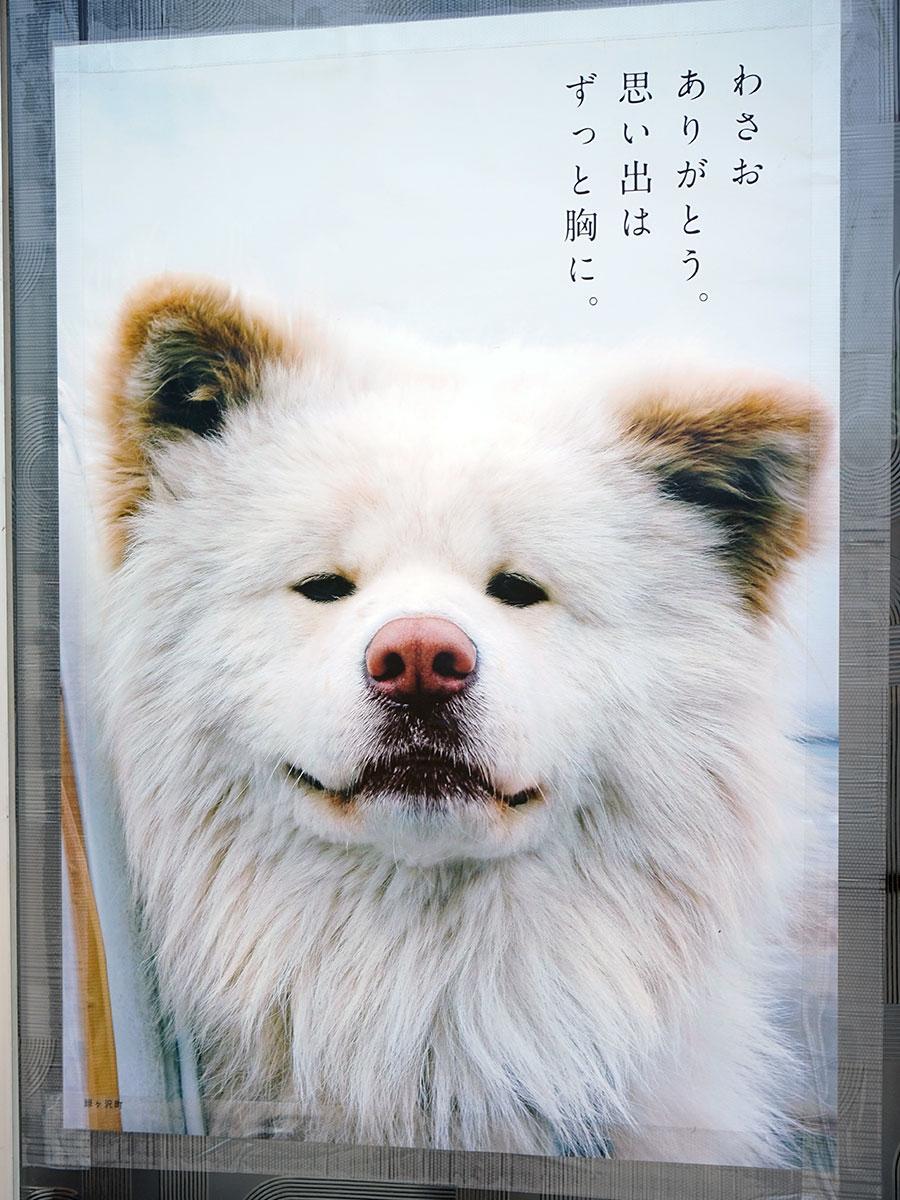 鯵ケ沢町に貼られた「わさお ありがとう」と書かれたポスター