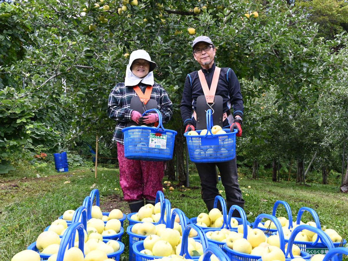 リンゴの収穫を手伝ったJICA海外協力隊訓練生の大野久美子さん(左)と壱岐満明さん(右)