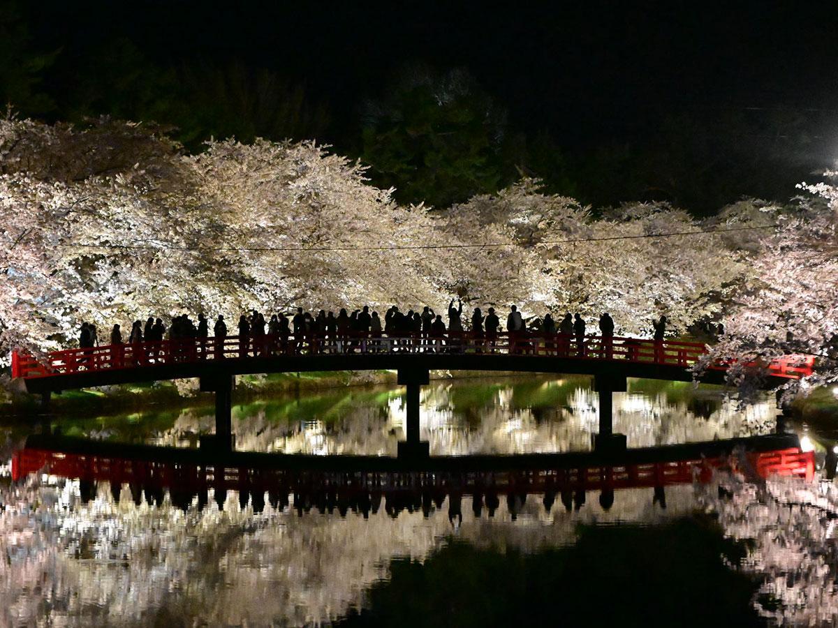 西堀の桜ライトアップ。春陽橋が鏡のように水面に映っている