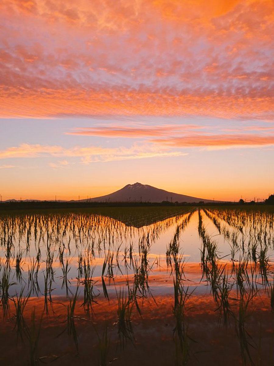 夕日の岩木山が田んぼの水面に写る(写真提供=ツシマケンタ@tsushimakentaさん)