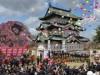 弘前さくらまつり開幕 初日は晴天、満開は24日以降