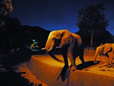 ライトに照らされたゾウ。納涼を兼ねた「ナイト☆サファリ」では昼間とほぼ変わらない種類の動物を見ることができる。