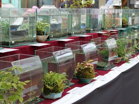 福屋屋上で始まった新種メダカなど約100種類のメダカを集めた「メダカ村」