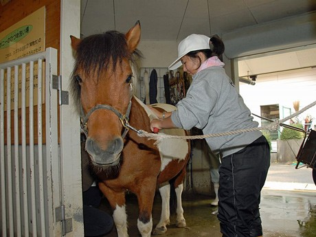 園内の動物の世話を体験できる「おとなのための飼育体験教室」へは現在26人からの応募があるという