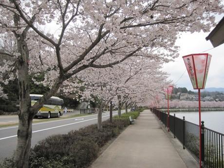 約1,000本のソメイヨシノが咲く上野公園は「日本さくら名所100選」にも選ばれた
