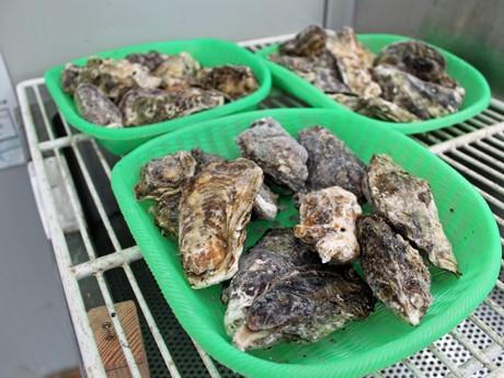 オイスターガーデンでは、全国一の生産量を誇る広島県産のカキ料理を提供する