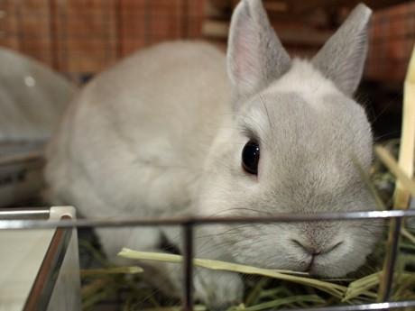 「垂れ耳」「立ち耳」「色」と3種類のウサギを扱う「ラビットパレード」