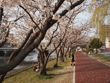 花見客も多い京橋川下流。ウオーキングやジョギング姿の男女もある。