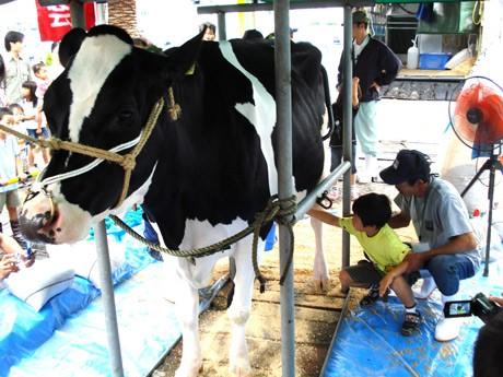 先着100人に1リットルの試飲用牛乳の配布と乳搾り体験