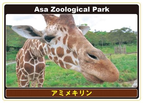 生き生きとした動物の表情を収めたアニマルカード