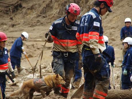 安佐南区八木・緑井地区でレスキュー活動を行った救助犬「夢之丞(ゆめのすけ)」