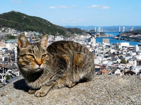 尾道には福石猫の集まるパワースポット「猫の細道」などを回る散歩道コースもある