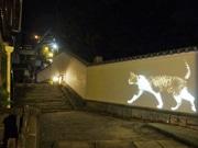 広島・尾道でナイトウオーク 「夜にしか会えない猫」テーマに街歩き