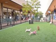 広島市沿岸部の商業施設に「ドッグカフェ」 ドッグラン増設し、ペット強化に