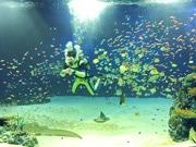 広島市沿岸部の「マリホ水族館」で毎週金曜にアルコール提供 夜営業のPR企画