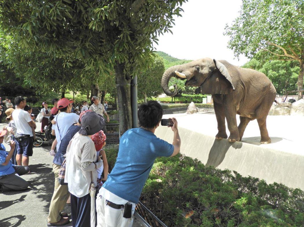 9キロの大玉スイカを鼻で持つアフリカゾウのタカ。このあと一口で平らげた