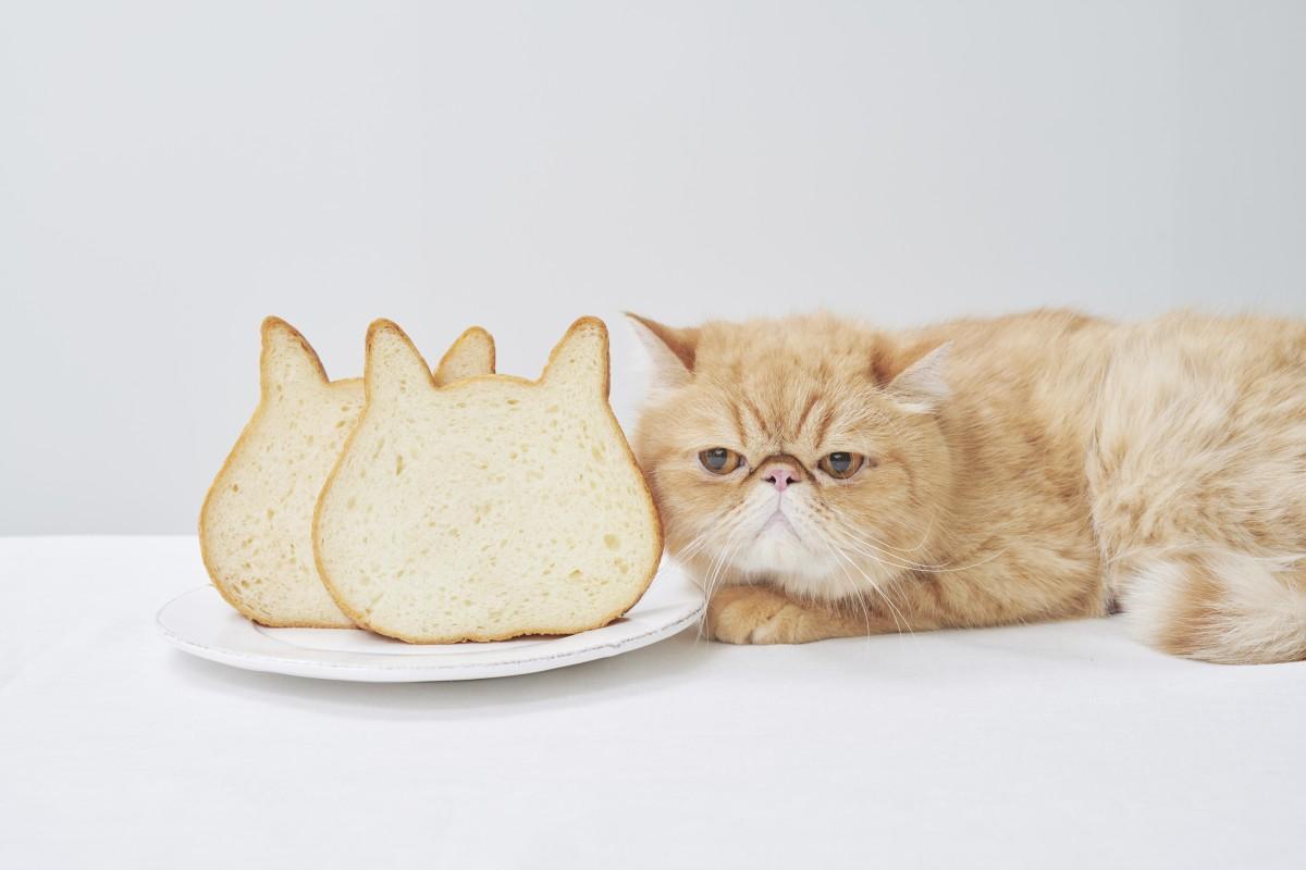 ジアウトレット広島にオープンしたネコの形が特徴的な高級食パン専門店「ねこねこ食パン」
