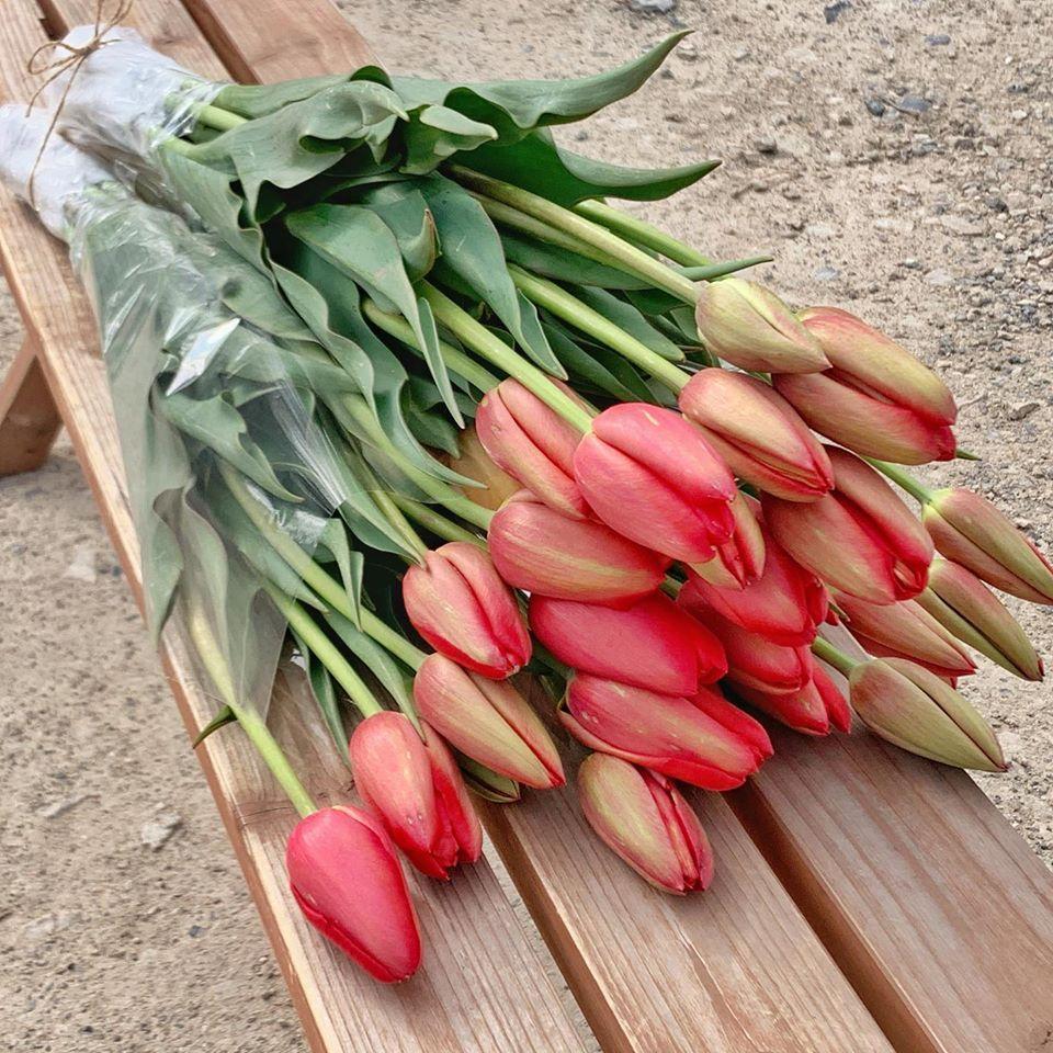 出荷するチューリップの切り花