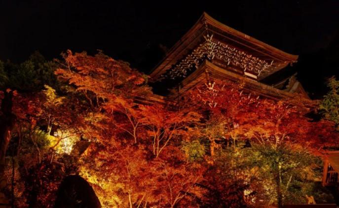 紅葉のライトアップを初めて行う宮島の大聖院