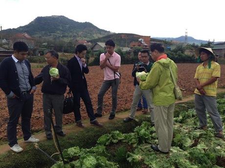 初収穫したレタスは日本の質に相当すると評価
