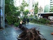 ホーチミン市で豪雨と突風-倒木や浸水被害も