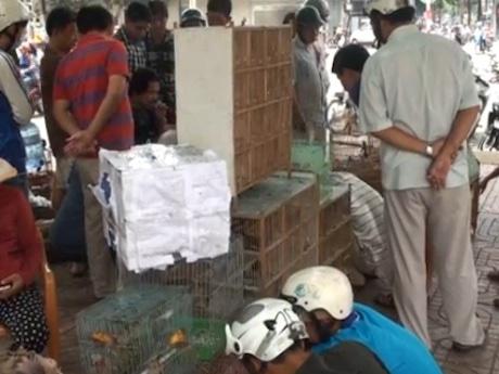 ホーチミン市の「爬虫類・昆虫市場」、鳥好きの人々が集う憩いの場に ©Vnexpress