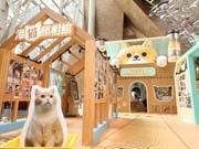 香港で「ねこ休み展」 海外初開催、香港の有名猫・クリーム兄貴の写真も
