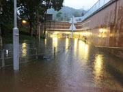 香港台風直撃で、5年ぶりのシグナル10発令 高潮の影響で水槽から魚逃げ出す