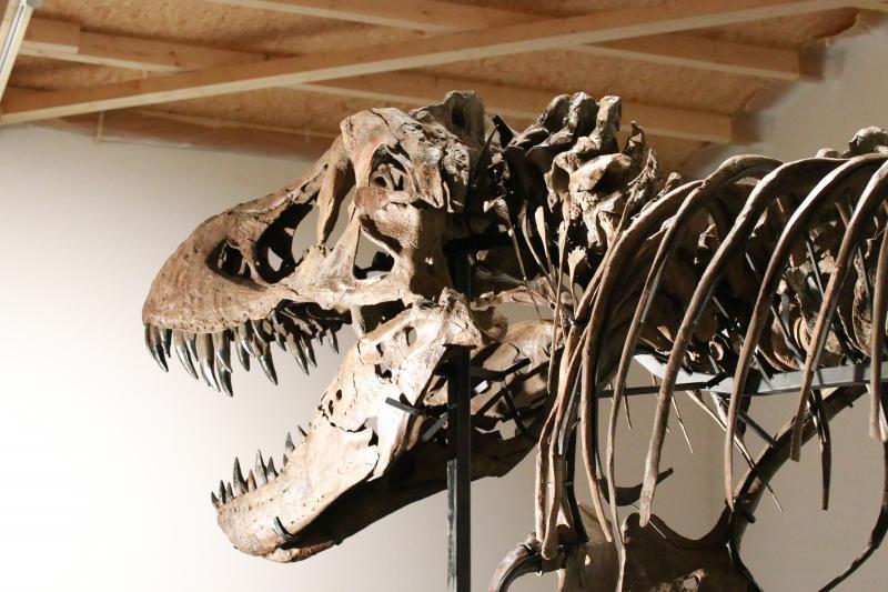香港のモールに登場した巨大なティラノサウルス
