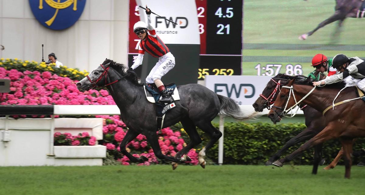香港の競馬で勝ったウインブライト