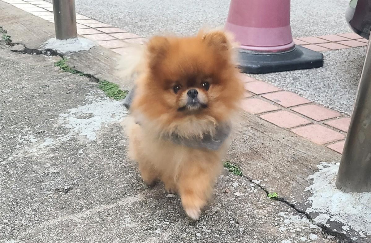 犬や猫を飼う人が増えている香港