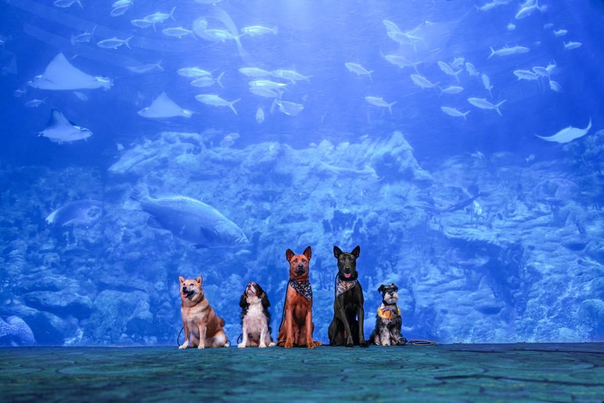 水族館にも犬同伴で入場が可能に