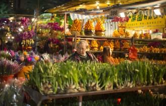 香港で花火大会など旧正月イベントの多くが中止 花市は中止から一転、規模を縮小して開催へ