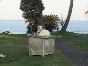 日向で「海が見えるフリマ」 ヤギカフェも同時開催