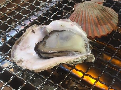網に載せられた細島いわがきと緋扇貝(ヒオウギガイ)