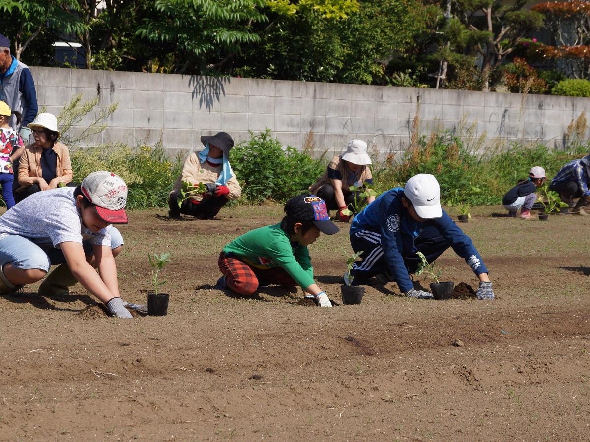 集団農場での種まき、苗植え