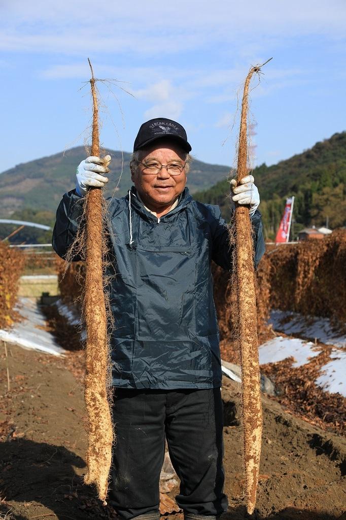 山本確さんの畑で収穫された自然薯