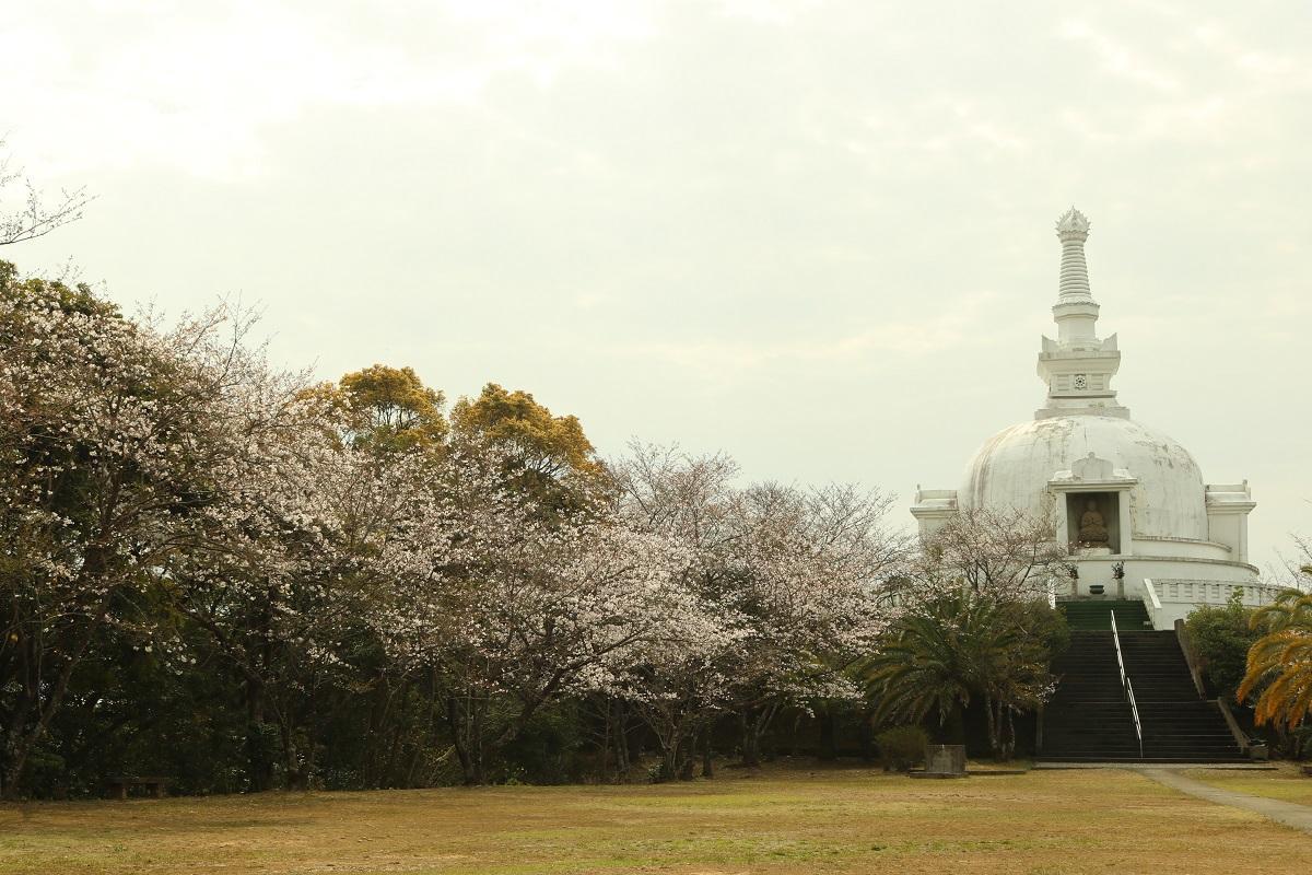 仏舎利塔と桜の構図を写真に収める人も多い「櫛ノ山」