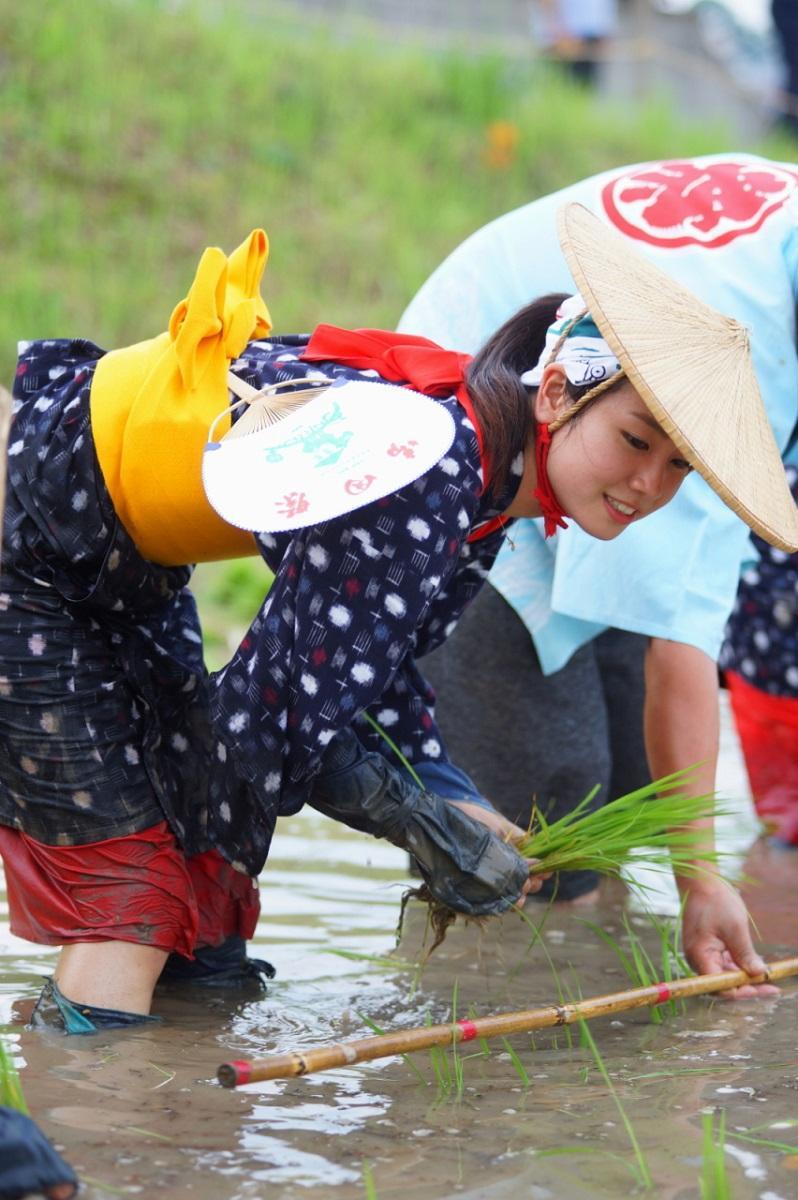 神田に稲を植える早乙女さん(撮影・千葉雄一)