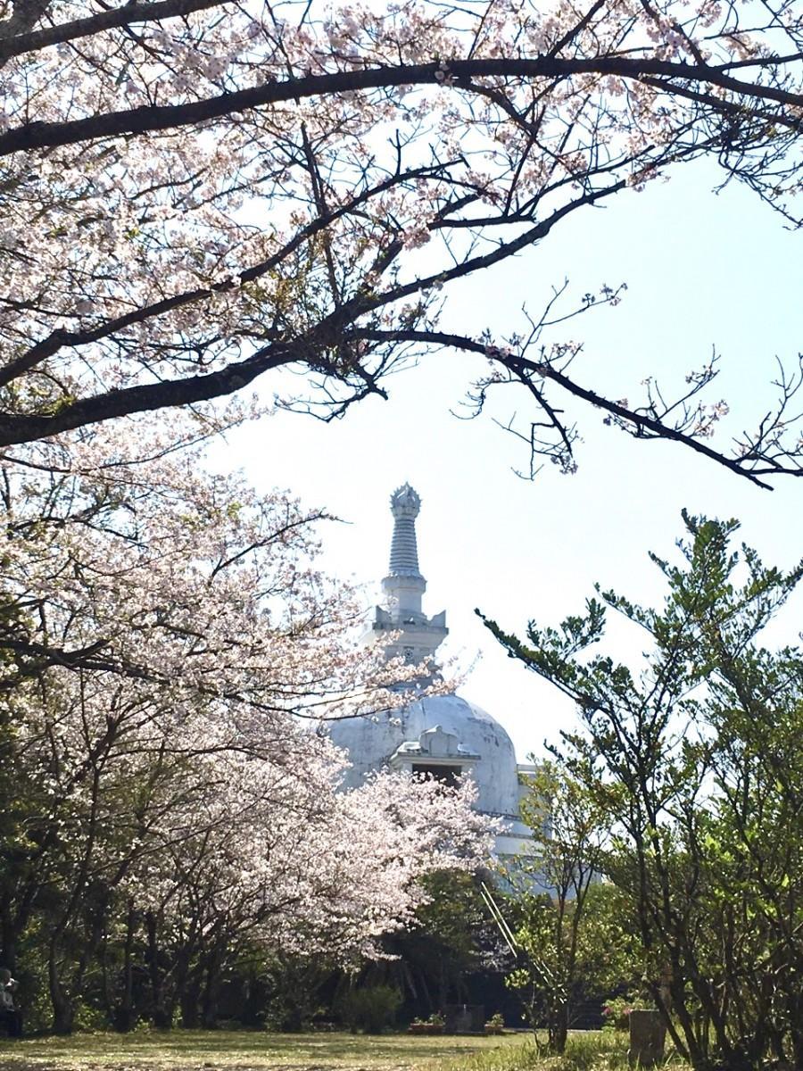 櫛ノ山公園に建つ仏舎利塔とサクラ