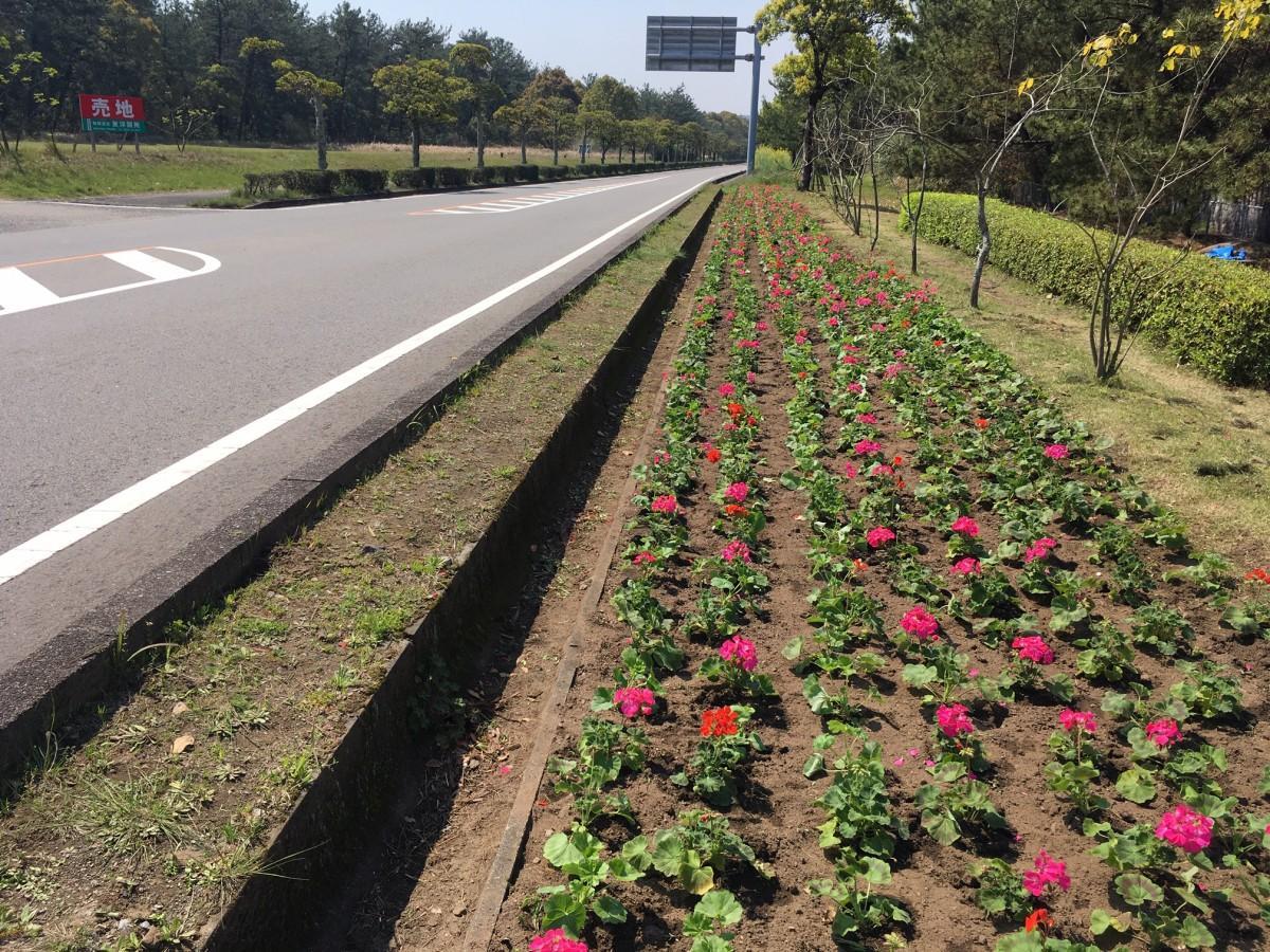 沿道を彩る花々