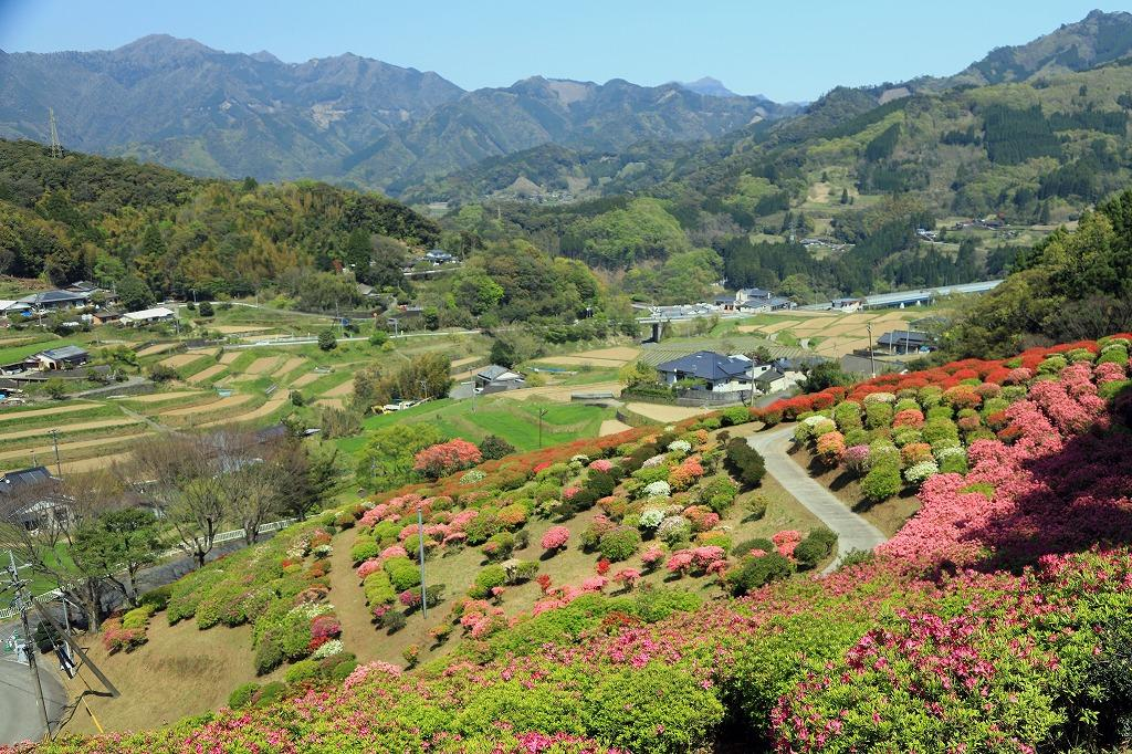 国道を見下ろす斜面にある天神山つつじ園