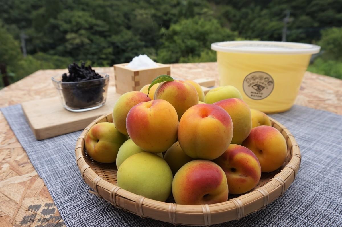 小さな桃くらいの大きさで香り高い美郷町産の完熟南高梅