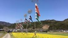 宮崎・西郷の和田地区に100匹のこいのぼり マスの釣り堀は中止