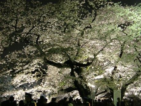 夜桜のライトアップを目当てに多数の人が集まる九段坂上の「千鳥ケ淵緑道」入り口付近。