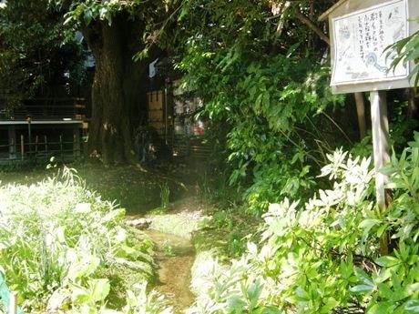 東京大神宮の境内にある「せせらぎ」(写真=昼の様子)