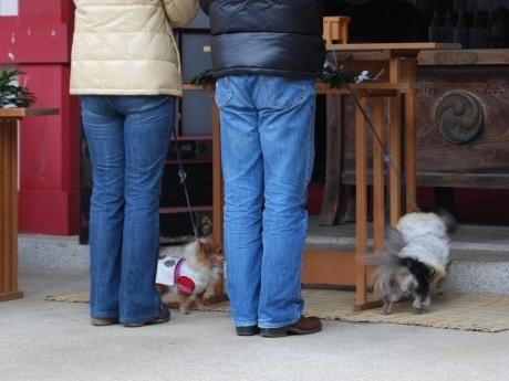 全国的にも数少ない「ペットと一緒の初詣」。写真は飼い主と一緒に祈願するペットの様子。