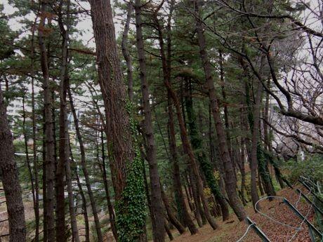 千代田区側の土手と線路の間の木々