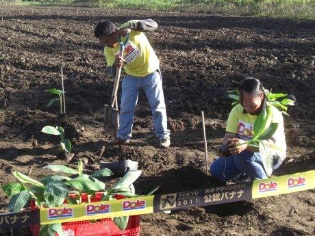 フィリピン南部ミンダナオ島のバナナ農園での「東京マラソン2011専用バナナ」苗植えの様子